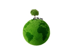 Cow standing on green earth